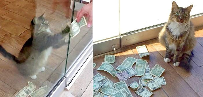 お金を奪い取る猫