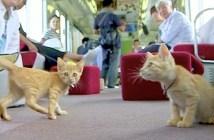 ねこカフェ列車