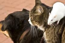 犬と猫とネズミ