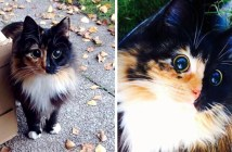 まん丸の瞳の猫