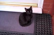ドアの前の猫