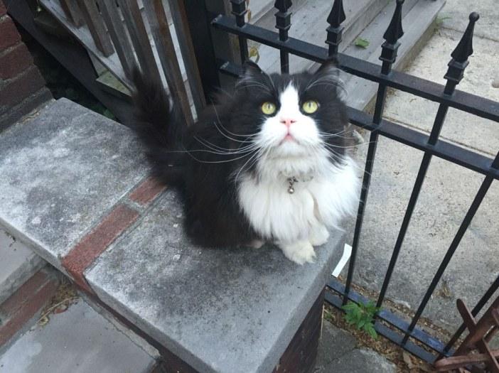 定位位置の猫