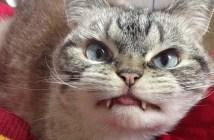 吸血鬼のような牙を持つ猫