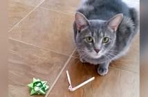 プレゼントを持ってくる猫