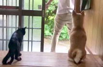 犬と猫の反応の違い