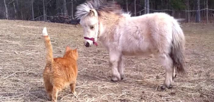 ミニチュアホースと猫