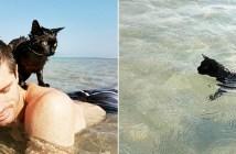 泳ぐのが好きな猫