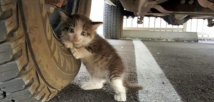 トラックの下の子猫
