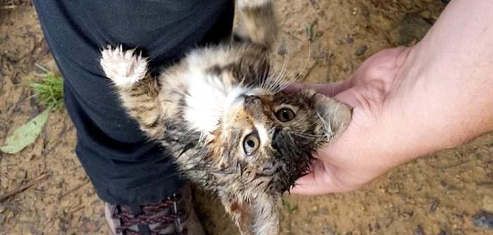 足にしがみついて来た子猫