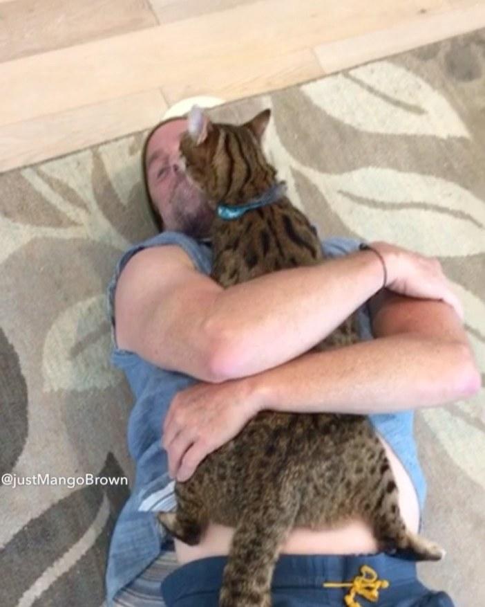 男性にハグされる猫