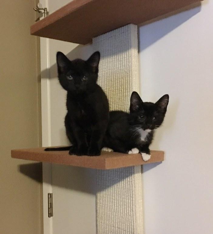 black_cat04