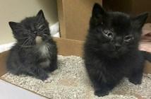 2匹の黒猫子猫