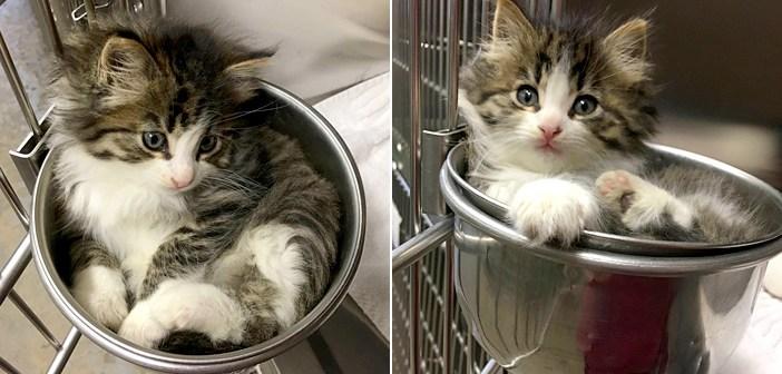 容器の中の子猫