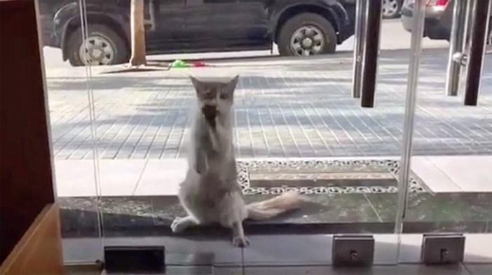 入り口の猫
