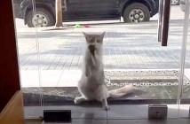 動物病院に来た猫