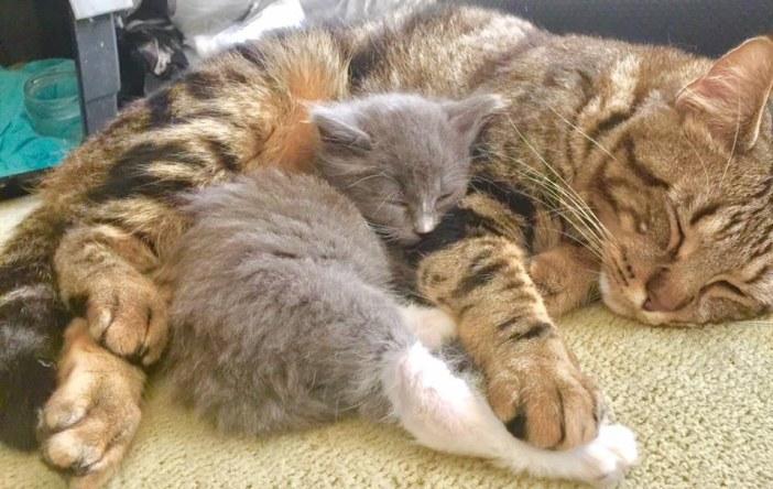 くつろぐ猫と子猫