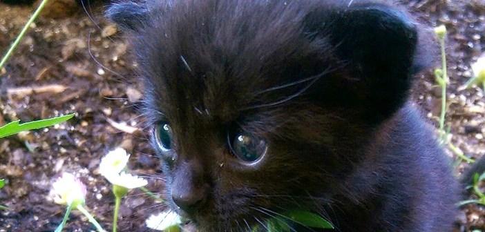 小屋の後ろにいた子猫