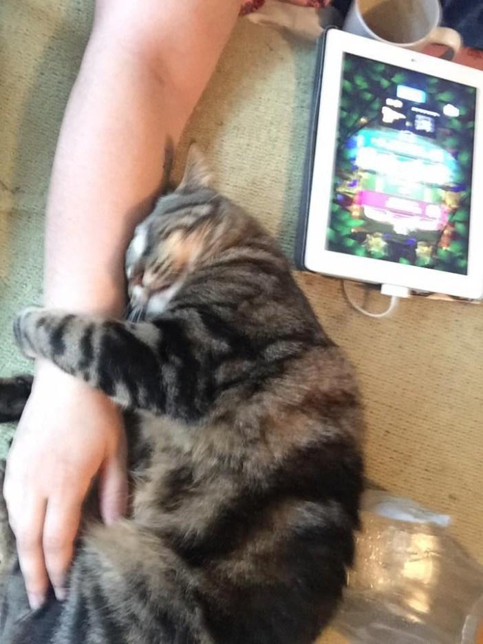 腕を抱きしめる猫