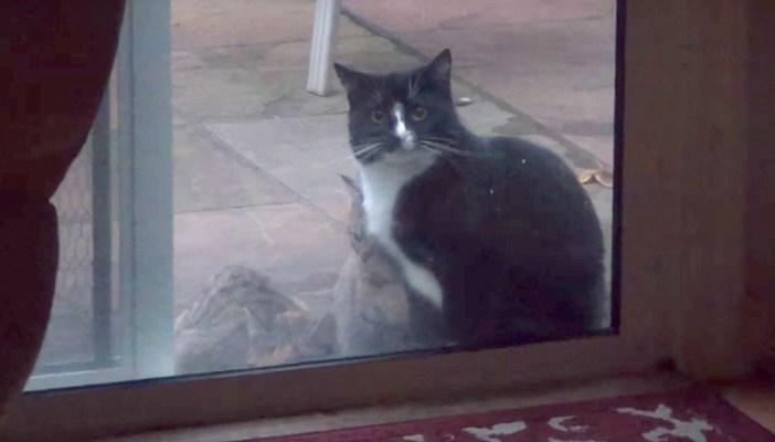 家の中を覗いてくる猫