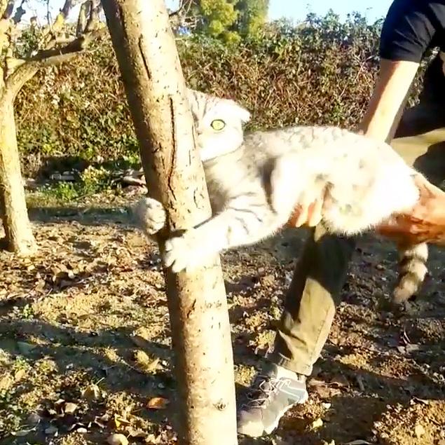 木を離さない猫