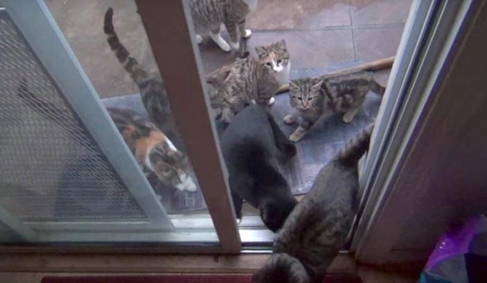 家に入ってくる猫