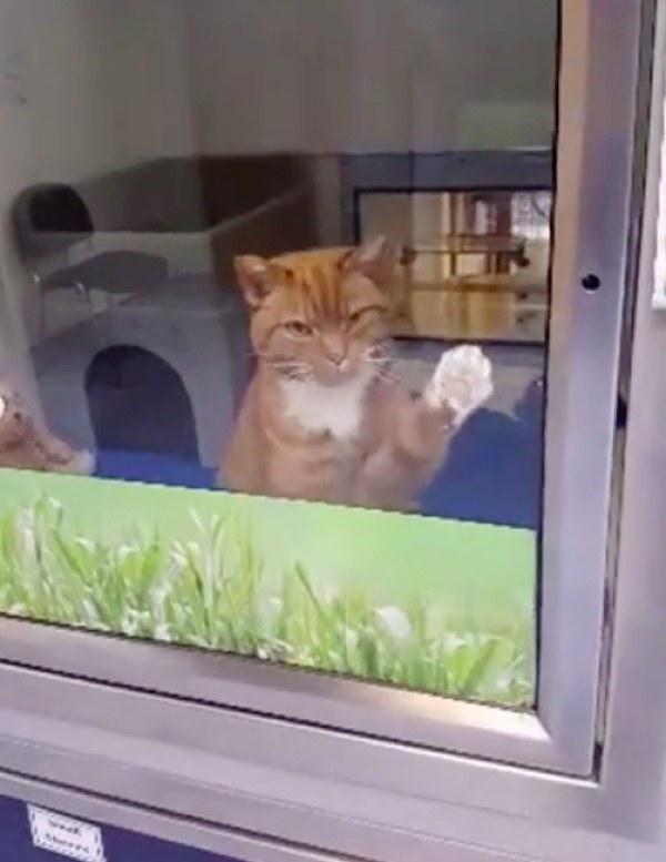 手をかざす猫
