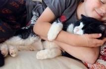 家族に迎えられた20歳の老猫
