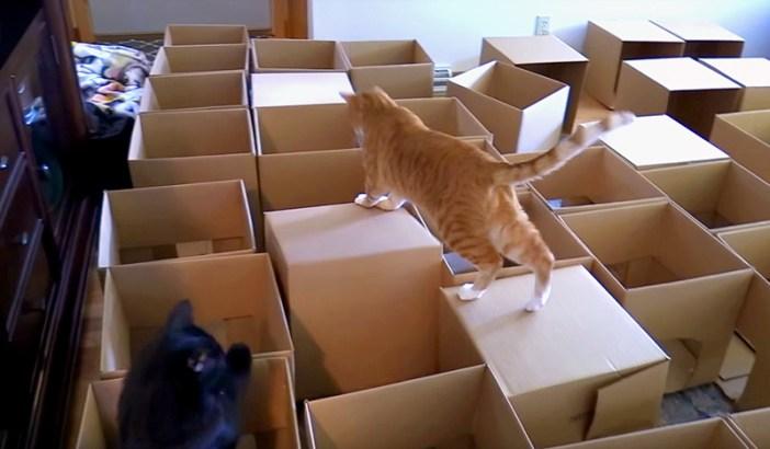 遊び回る猫