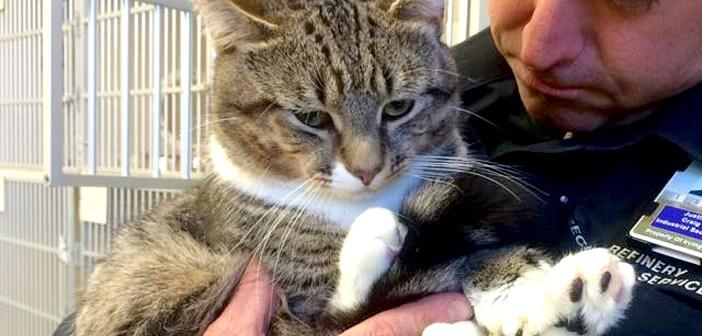 手の大きな猫