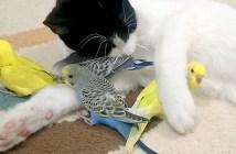 仲良しな猫と鳥
