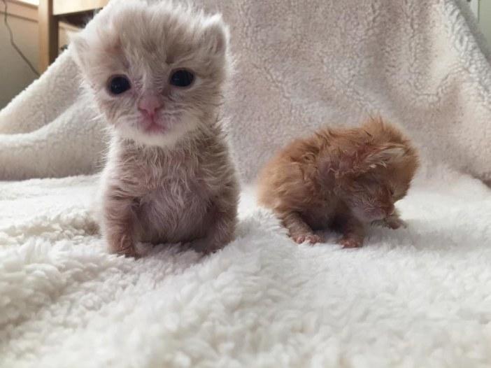 子猫の兄弟