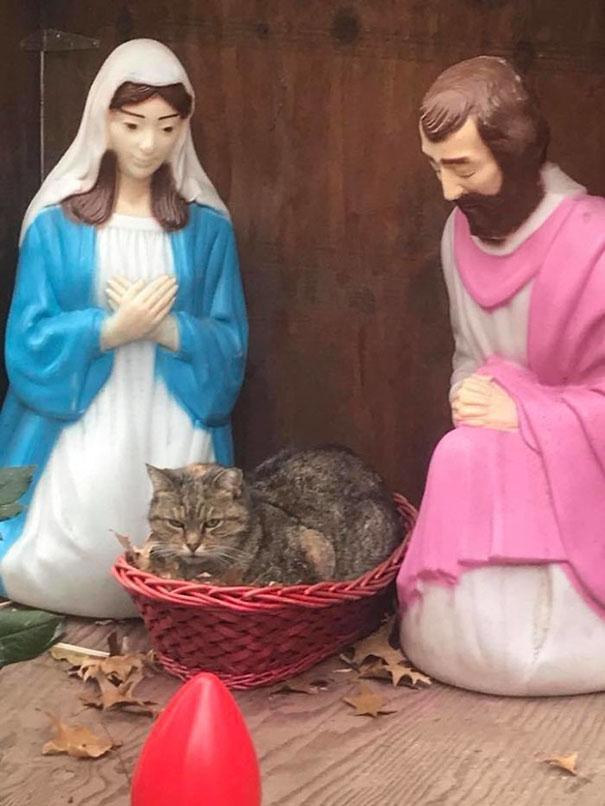 キリスト降誕と猫
