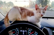 ドライブスルー猫