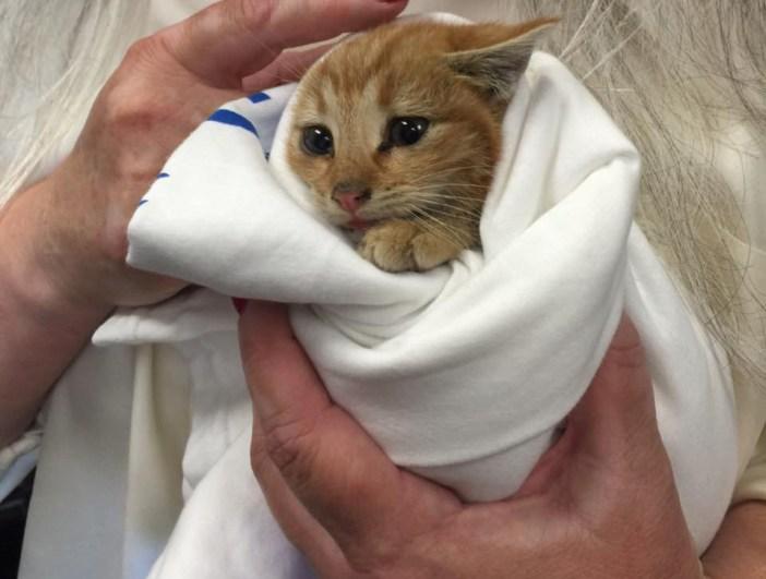 抱えられる子猫