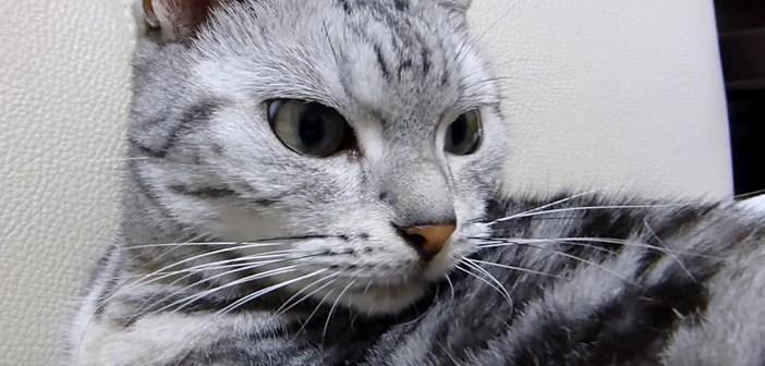猫に黙って外泊