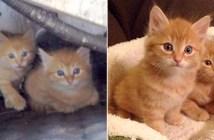 保護された子猫兄弟