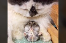 仲良しな猫とハムスター
