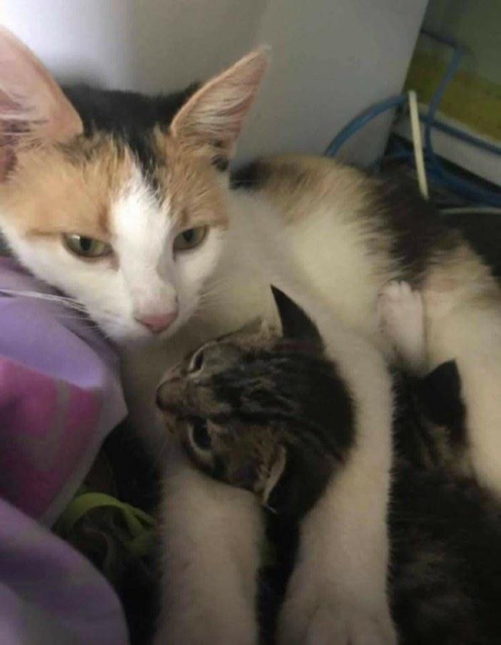 子猫を抱っこする母猫