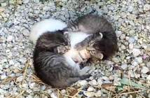 妹を守る兄猫