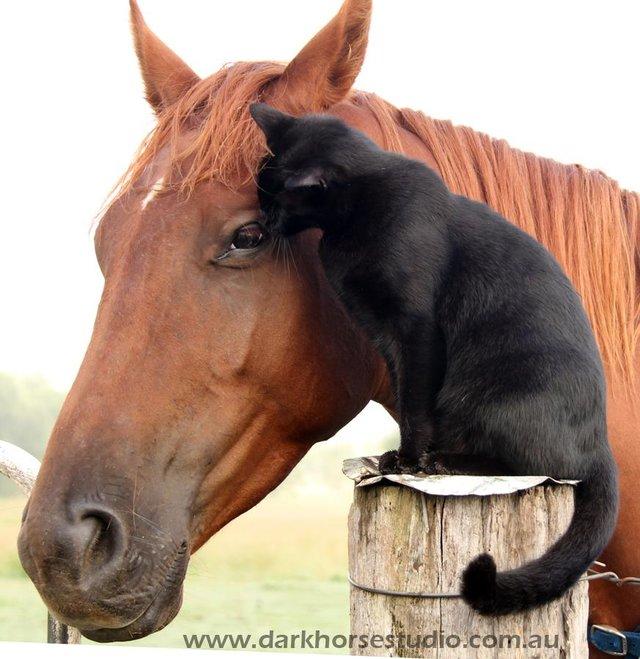 スリスリする馬と猫
