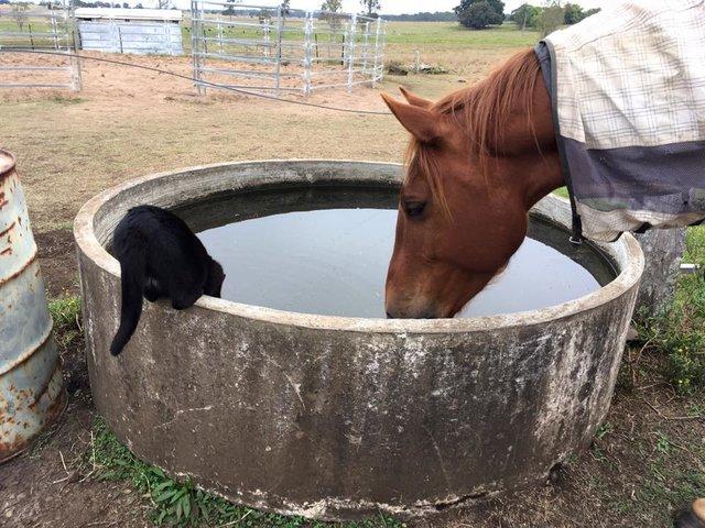 馬と水を飲む猫