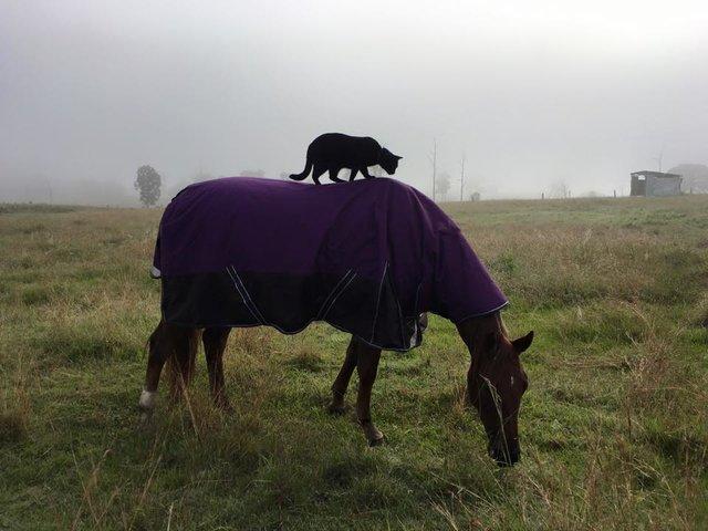 馬と一緒の猫