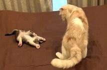 不思議な子猫