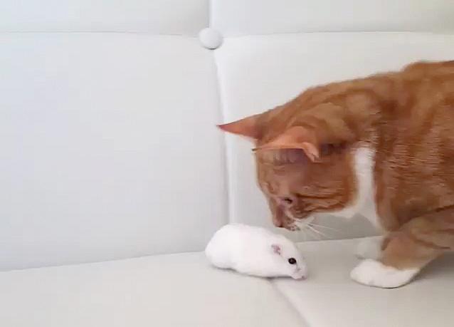 ネズミと出会った猫