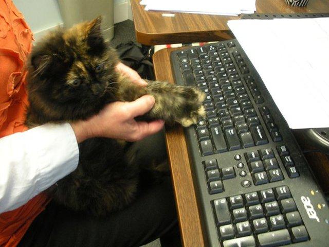 一緒に仕事をする猫