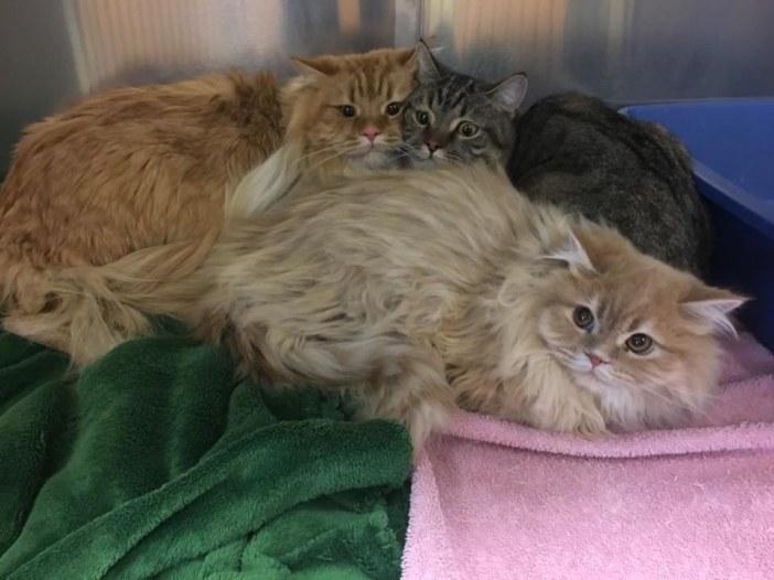 保護された3匹の猫