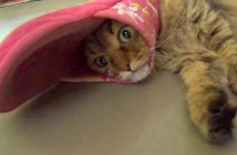 スリッパにハマった猫