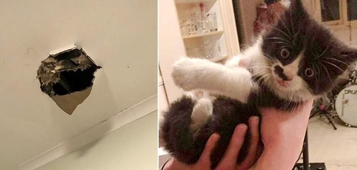 壁の中の猫