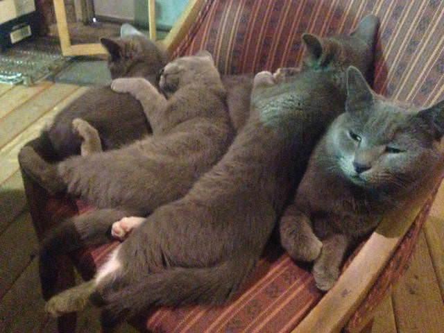 幸せな猫の家族