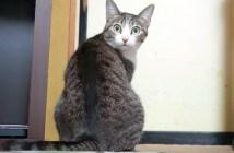 8度見する猫